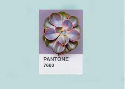 Paleta de color PANTONE 7660