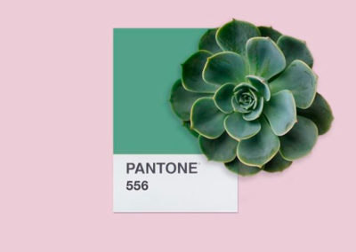 Paleta de color PANTONE 556