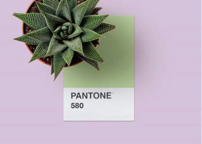 Paleta de color PANTONE 580